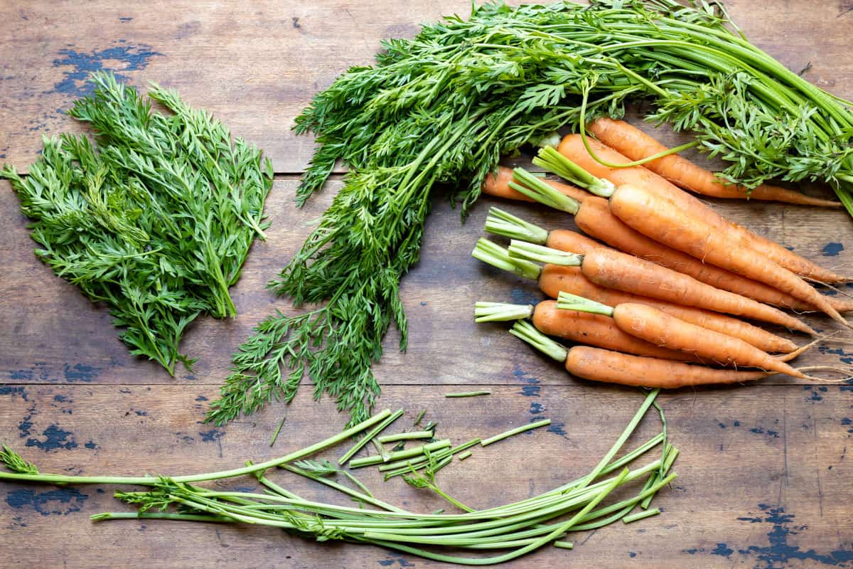Carrot tops being cut from the stems.